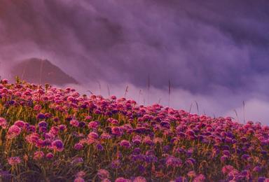 [贵州花海]天上花海韭菜坪+九洞天+阿西里西大草原+乌江画廊(5日行程)